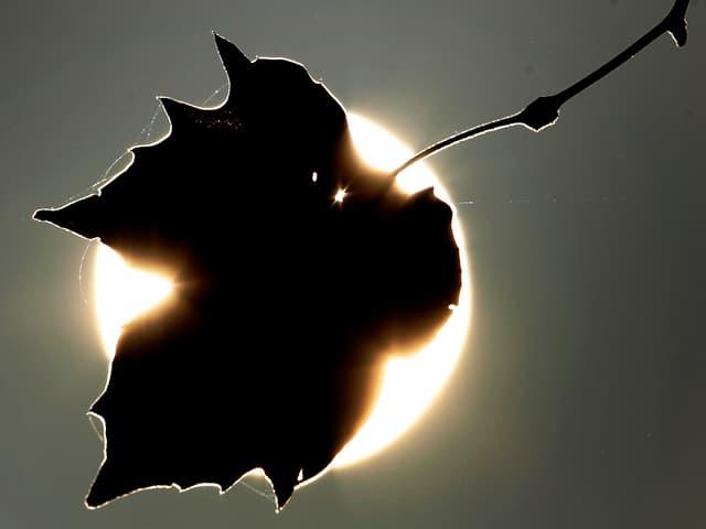 Blatt vor Sonne