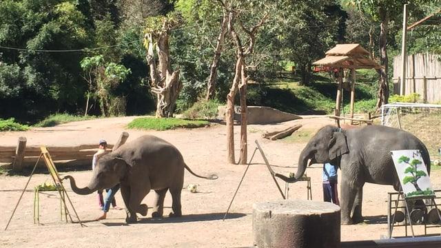 Elefanten-Kaffee.