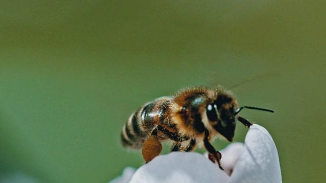 Super Bio Hero: Biene und Schmetterling (12/12)