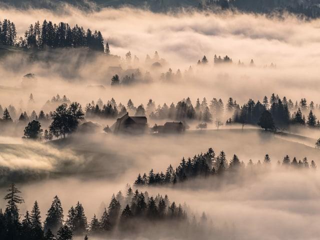 Nebelschwaden über dem hügeligen Emmental.