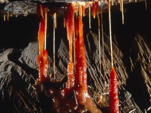 Wenn Stalaktiten und Stalagmiten zusammen wachsen entstehen Stalagnate.