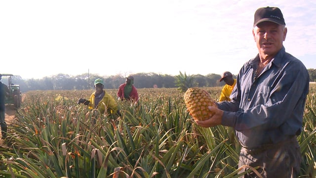 Video «Herr Trüeb im Ananas-Land» abspielen