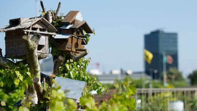 Ein Vogelhäuschen in einem Zürcher Familiengarten. Im Hintergrund der Prime Tower.