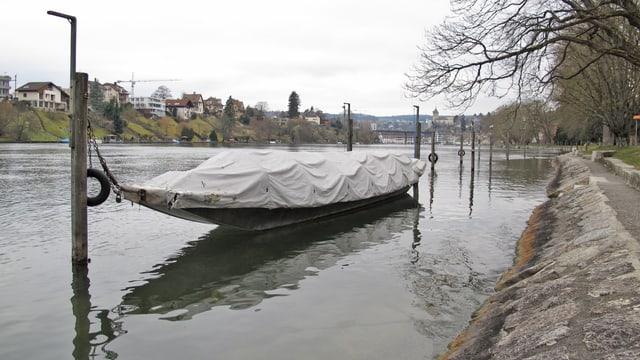 Weidling im Rhein