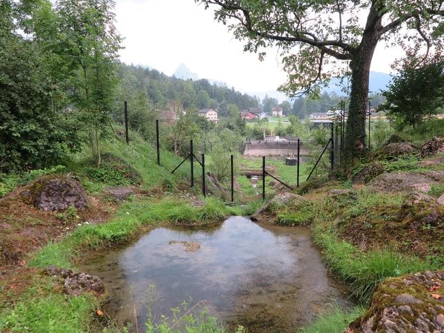 Eine Wiese mit Teich und Bäumen mit einem starken Zaun umzäunt ist.