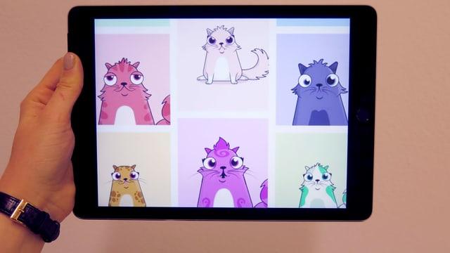 Ein Screen zeigt Katzen.