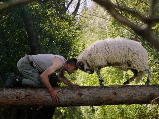 Ein Mann misst sich mit einem Schafsbock. Schädel an Schädel.