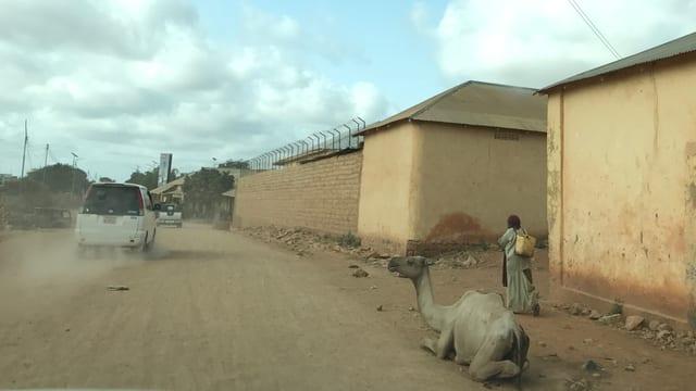 Ein Kamel sitzt am Strassenrand.
