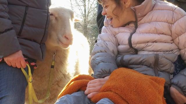 Video «Tiergeschichten (3/10): Unsere treuen Gefährten» abspielen