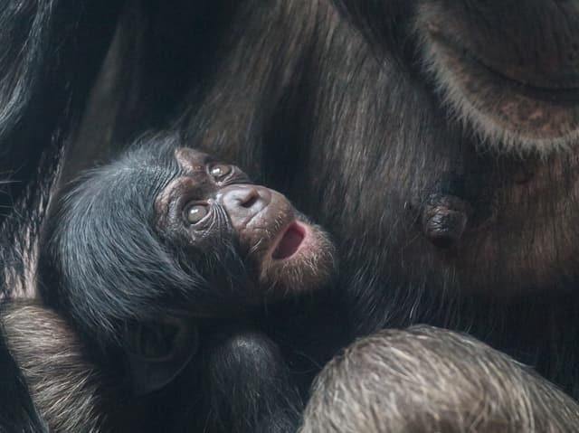 Blick auf das Affen-Baby