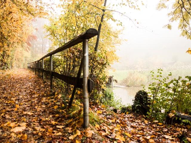Im Wald mit Blick auf einen Weiher. Der Boden ist übersät mit Herbstblättern, an den Bäumen hängen noch Blätter in verschiedensten Farben.