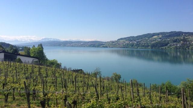 See und Rebberge