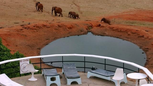 Elefanten an leerer Hotel-Terasse