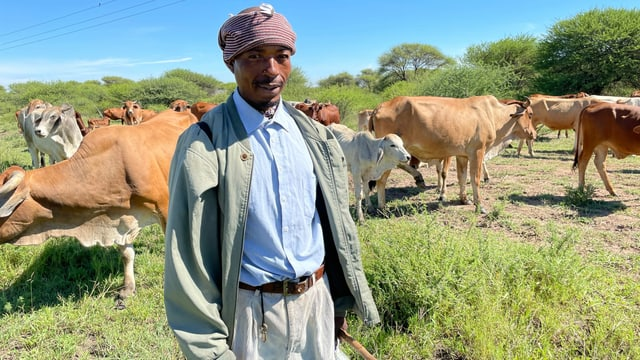 Mann steht vor Kühen.