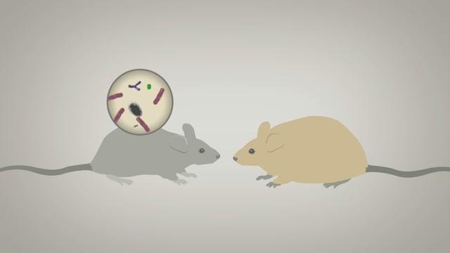 Zeichnung von zwei Mäusen.
