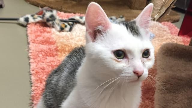 Kätzchen mit tränenden Augen