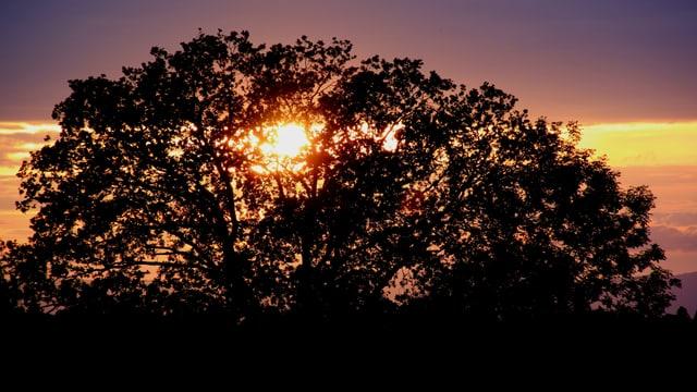 Die Sonne geht hinter einem Baum unter.