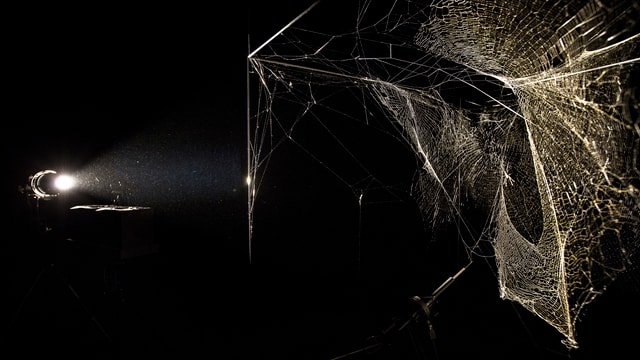 Ein Spinnennetz in der Luft.