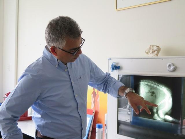 David Spreng, Direktor des Departementes für klinische Veterinärmedizin an der Tierklinik Vetsuisse.