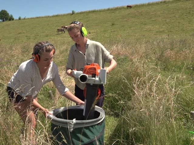 Zwei Frauen stehen auf einer Wiese, mit Ohrenschützern und Laubsauger in den Händen und saugen anscheinend Insekten aus der Wiese aus.