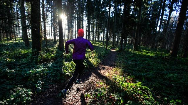 Rückenansicht eines Joggers im Wald.