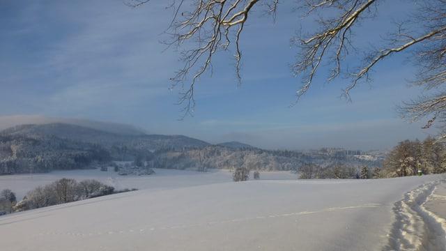Schneelandschaft in Ettenhausen (TG).