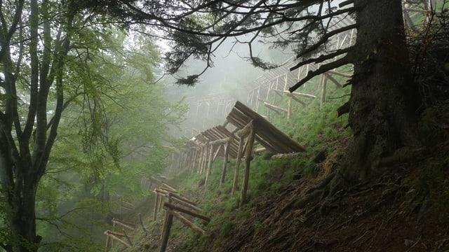 Holzverbauungen zum Schutz von Bäumen