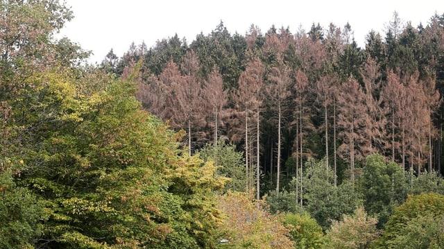 So stark haben die Schweizer Wälder gelitten (Artikel enthält Video)