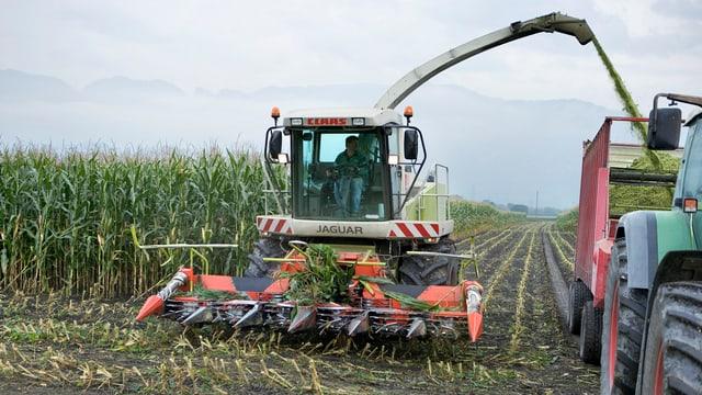 Bauer in grosser Erntemaschine im Maisfeld
