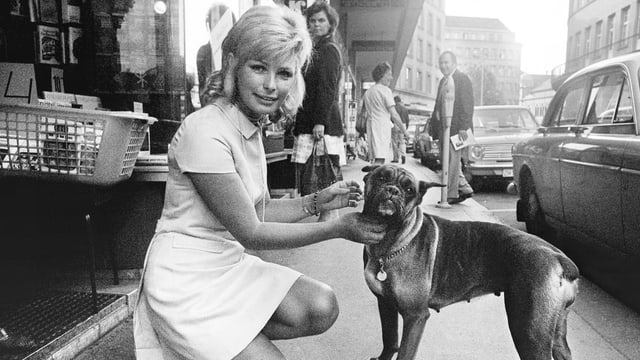Dänische Bardot mit kleinem Makel