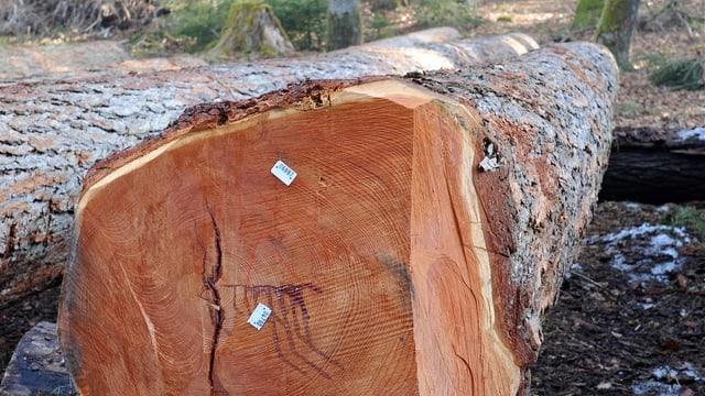 Ein schöner, dicker Holzstamm.