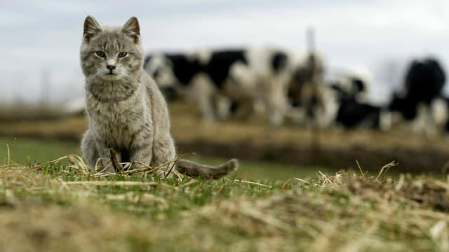 Katze sitzt auf Wiese
