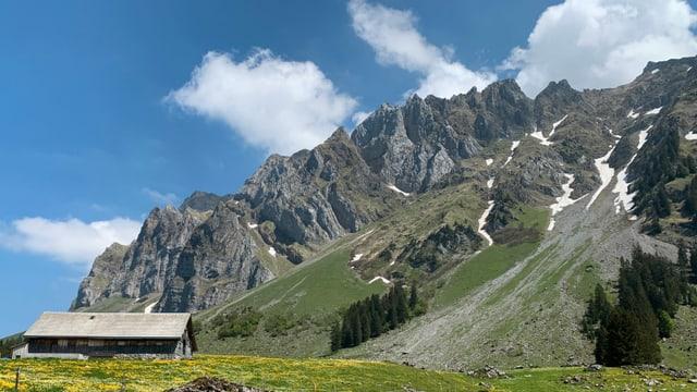 Ein Bauernhaus, eine Blumenwiese und ein Gebirge: alles bei strahlend schönem Sommerwetter.
