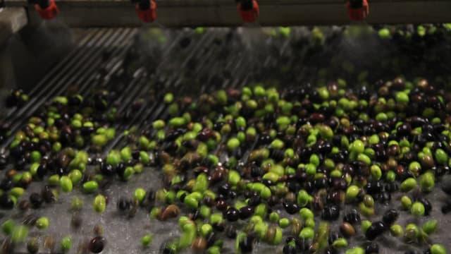 In der Olivenmühle