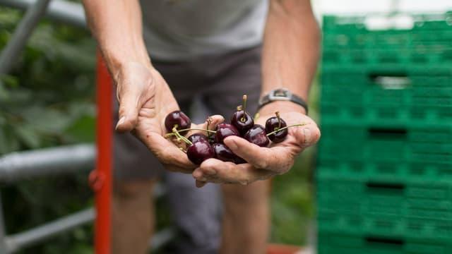 Ils purs svizzers duain cultivar il terren cun quità e producir las victualias ecologicamain.
