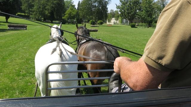 Pferde ziehen einen Wagen durch einen Park.