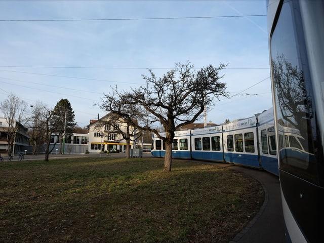 Blau-weisses Tram steht an der Endhaltestelle, daneben eine Wiese mit Bäumen.