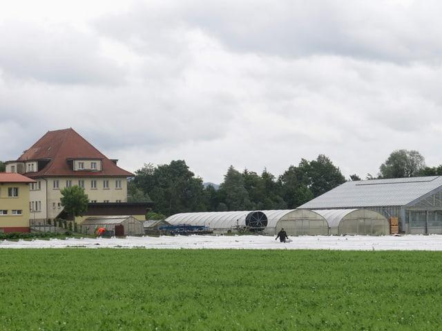 Haus und Gemüsefeld