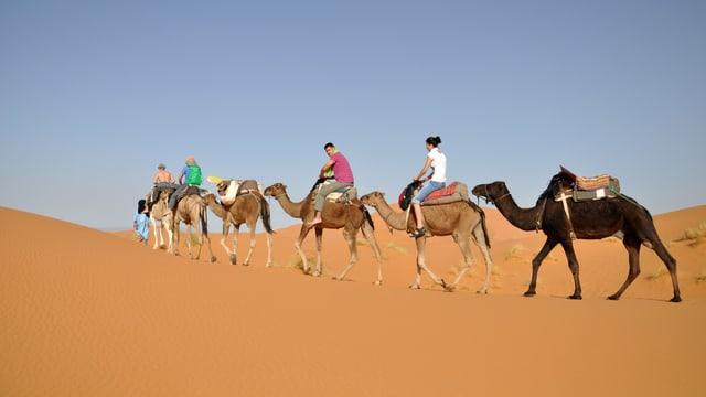 Touristengruppe reitet auf Kamelen durch eine Sandwüste