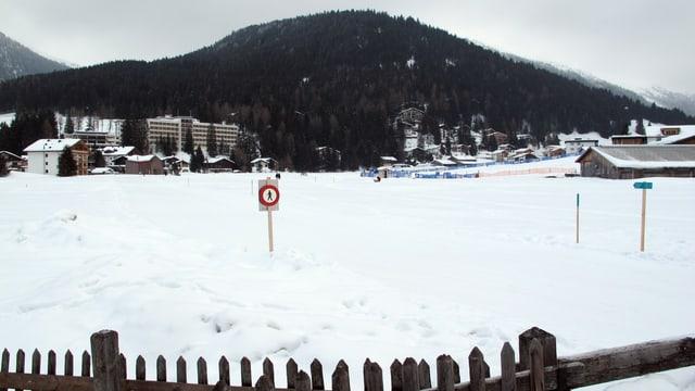 Wiese in Davos
