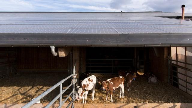 Freilaufstall mit Fotovoltaik-Platten auf dem Dach.