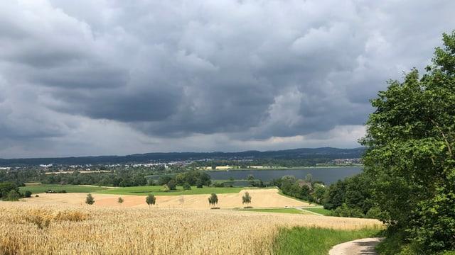 Von Fällanden Blick nach Norden auf ein Kornfeld und den Greifensee