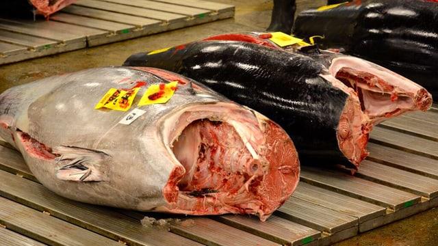 Linker Fisch: graue Oberfläche, rosa Fleisch; rechter Fisch: schwarze Oberfläche, rosa Fleisch.