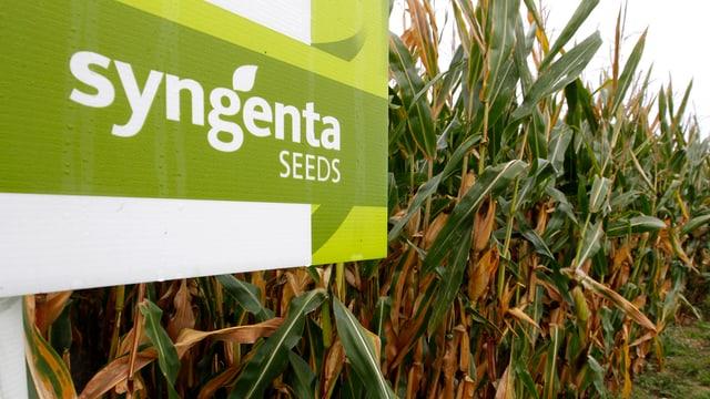 Ein Syngenta-Schild am rande eines Maisfelds.