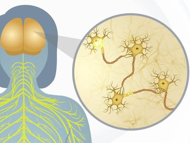 Funktionierende Nervenstränge