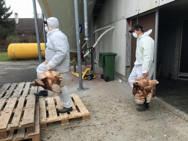 Mitarbeiter des Thurgauer Veterinäramts bringen die erkrankten Hühner weg