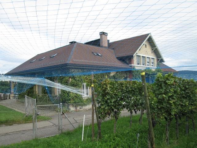 Weinbauzentrum