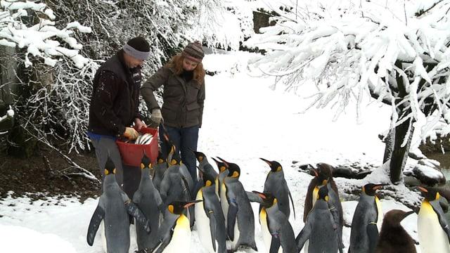 Video «Winter im Zoo Zürich» abspielen