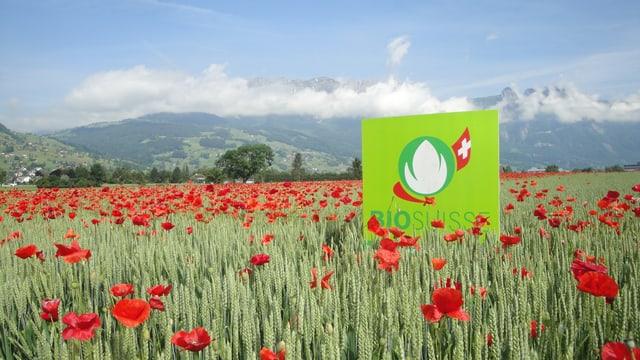 Bo-Getreidefeld mit Mohnblumen und Bio-Suisse-Werbetafel.