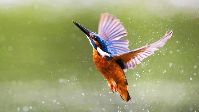 Mehr Vogelgeschichten